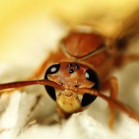 to deep for a honey bee by Praveen Premkumar - Animals Insects & Spiders ( macro, smooth, bee, adorable, soft,  )