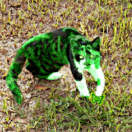 My Fav Martian's Cat by Cheryl Beaudoin - Illustration Animals ( cat, green, glows, favorite, martian,  )