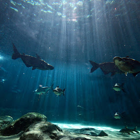 Beauty of the Bottom by Kresnata Adijaya - Landscapes Underwater ( fish, bottom, river )