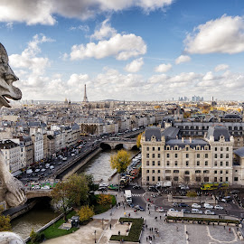 Paris from Cathédrale Notre Dame by Michael Wiejowski - City,  Street & Park  Historic Districts ( paris, europe, notre dame, cathédrale, gargoyle, eiffel, cathedral, france )