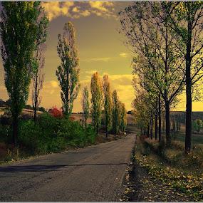 by Viorel Vaida - Landscapes Mountains & Hills