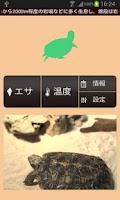 Screenshot of 【無料育成】ポケット爬虫類(カメ)~パンケーキ~