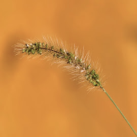 Alone by Karen Hardman - Nature Up Close Leaves & Grasses