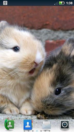 可愛的兔女郎現場壁紙