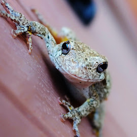 by Lori Kulik - Animals Amphibians (  )