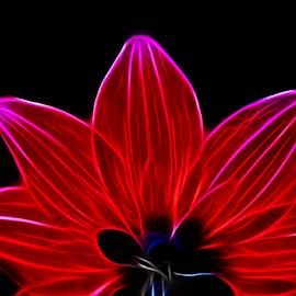by Dipali S - Digital Art Things ( red, nature, digital art, flower )