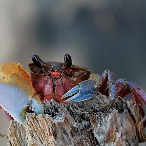 by Arie Dexz - Animals Sea Creatures (  )