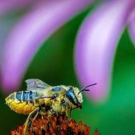 Bee by Hytham Elbohy - Nature Up Close Gardens & Produce