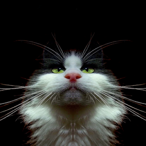 Dictator by Jurijs Ratanins - Instagram & Mobile Android ( look, mobilography, cat, wiskers, pet, portrait )