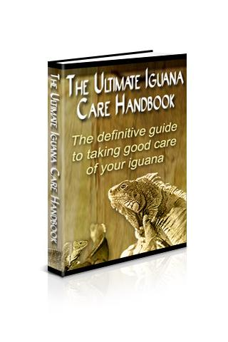Ultimate Iguana Care Handbook