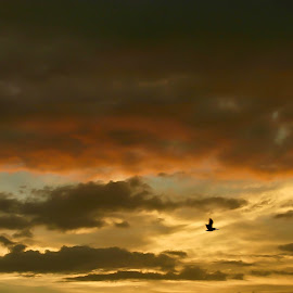Orange And Yellow by Brenda Hooper - Landscapes Cloud Formations ( bird, orange, sky, yellow,  )