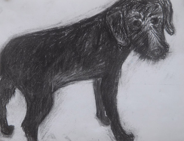 Fred <br> Pastel on paper <br> 8.5 x 11 in
