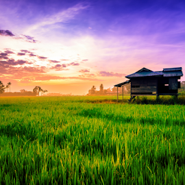 The Glorious Sunrise by Syazwan Shahril - Landscapes Prairies, Meadows & Fields ( paddy field, hut, grass, green, paddy, sunrise )