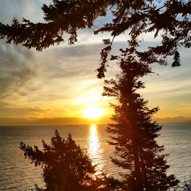 Sunrise by Jamie Wilson - Novices Only Landscapes ( mountain, tree, vancouver island, sea, trees, ocean, sunrise, morning, sun )