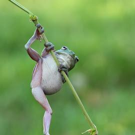 help by Kurito Afsheen - Animals Amphibians