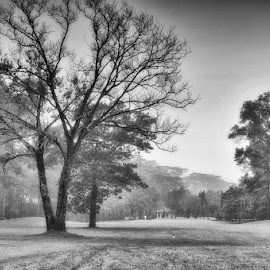Caddy by Krisna Putra - Sports & Fitness Golf ( caddy, tree, black and white, golf, landscape )