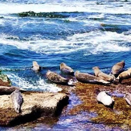 Beached Seals by Lori Fix - Animals Sea Creatures