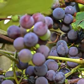 by MIrella Napolitano - Food & Drink Fruits & Vegetables