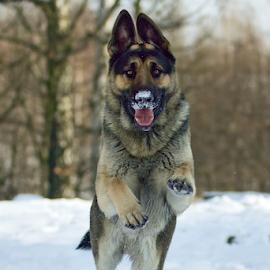 Ronny by Miroslav Socha - Animals - Dogs Portraits