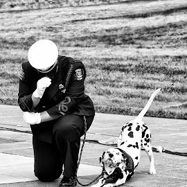 a day of Rememberance  by Kelvin Watkins - News & Events US Events ( somber, black and white dog, dalmation, white hat. fire fighter, kneeling )