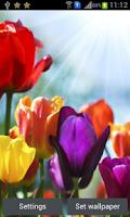 Screenshot of HD Flowers Live Wall Paper