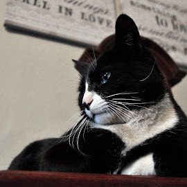The King by Mone Ehlers - Animals - Cats Portraits ( cats, animals, still life, pets, lazy,  )