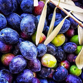 Olives Harvest by Rüstem Baç - Nature Up Close Gardens & Produce ( tasteful, colors, fall, harvest, olives, color, colorful, nature )