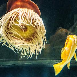Happy together by Mike O'Connor - Animals Fish ( water, fish, oceanarium, aquarium, sea )