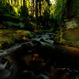 Křenice by Pavel Klučar - Landscapes Forests