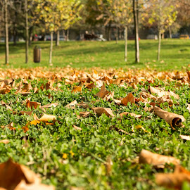 Autumn in the park by Daniel Ciolac - City,  Street & Park  City Parks ( park, grass, green, romantic, mood, leaf, rusty, yellow, close up, sun, close, leafs, tree, nature, season, autumn, trees )