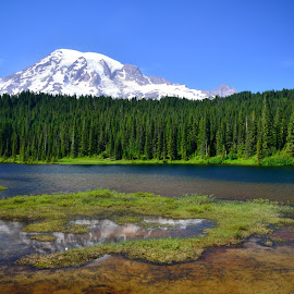 Oasis by Erin Perkins-Watry - Landscapes Mountains & Hills ( mountain, nature, trees, lake, mr. rainer )