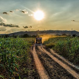 Sunset on the Fields by Daya Gaddala - Landscapes Prairies, Meadows & Fields ( clouds, hills, plants, road, corn, sun, field, mountains, sky, village, farmer, sunset, dust, india, dirt, tractor )
