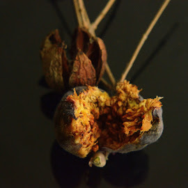 Anjir seeds by Prasanta Das - Nature Up Close Other Natural Objects ( anjir, composition, opened )
