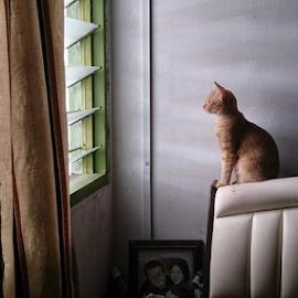 Oyen by Wan DV II - Instagram & Mobile Android