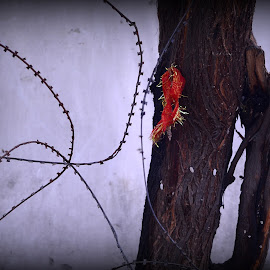 Taboo by Prasanta Das - Abstract Patterns ( taoob, red ribbon, barbed wire, tree trunk )