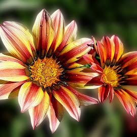 by Biljana Nikolic - Flowers Flower Gardens