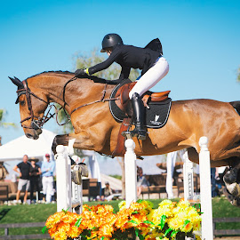 The Jump Off by Bethany Unwin - Sports & Fitness Other Sports ( horseback riding, hunter, equine, horses, riding, horse, grand prix, show jumping, equestrian, jump, jumper )