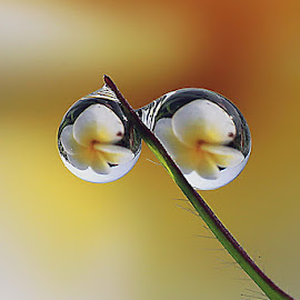 :: Clear :: by Dedy Haryanto - Nature Up Close Natural Waterdrops (  )