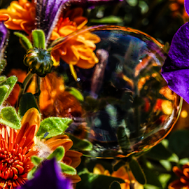 Bubble life by Brian Box - Abstract Macro ( macro, colorful, purple flowers, bubbles, orange flowers, flowers )