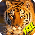 Animal Sounds for Children APK for Lenovo
