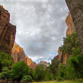 Zion by Leslie Nu - Landscapes Travel ( clouds, mountains, zion national park, grass, trees, cloudscapes, ut, landscapes, zion, rocks, deserts )
