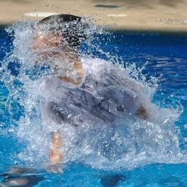 Water splash by Mark Butterworth - Sports & Fitness Swimming