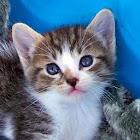 Awkward Kitten icon