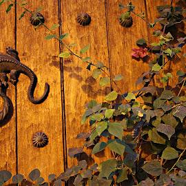 Knocker in door in Cartagena City Colombia by Fabiano Ignacio - Buildings & Architecture Homes ( cartagena; knocker;colombia,  )