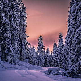 by Peter Engman - Landscapes Forests