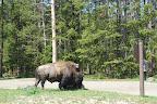 Yellowstone og omegn 117.jpg