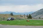 Yellowstone og omegn 126.jpg