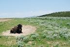 Yellowstone og omegn 152.jpg