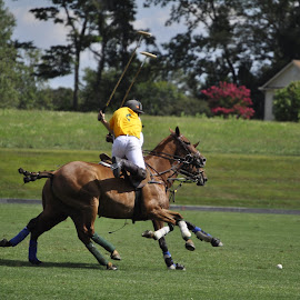 Marco Polo by Douglas Ward - Sports & Fitness Other Sports ( chukker, horses, sport, polo, swing )