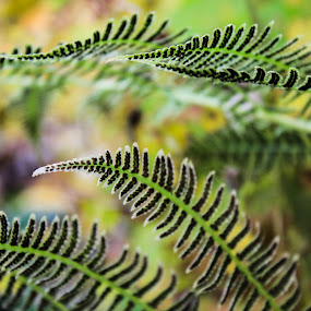 by Christine Weaver-Cimala - Nature Up Close Leaves & Grasses ( fern, green, leaf, bokeh, renewal, trees, forests, nature, natural, scenic, relaxing, meditation, the mood factory, mood, emotions, jade, revive, inspirational, earthly )